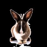 Zajączek to jeden z symboli Wielkanocy i płodności