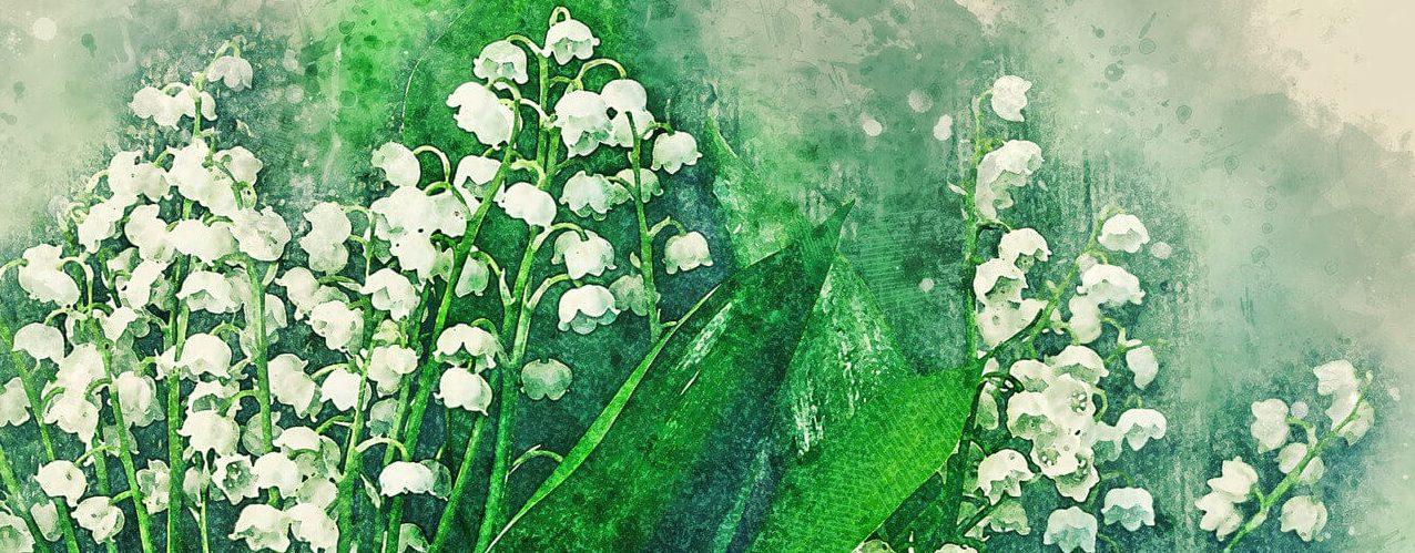 Konwalia - znaczenie i symbolika kwwiatu