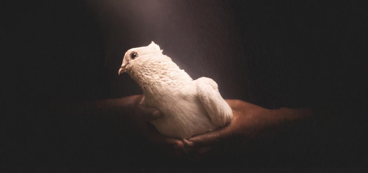 Symbole ducha świetego